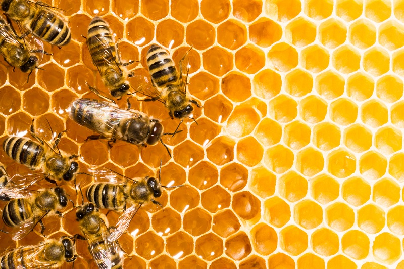 Four Interesting Things to Know About Bees • Connect Nigeria