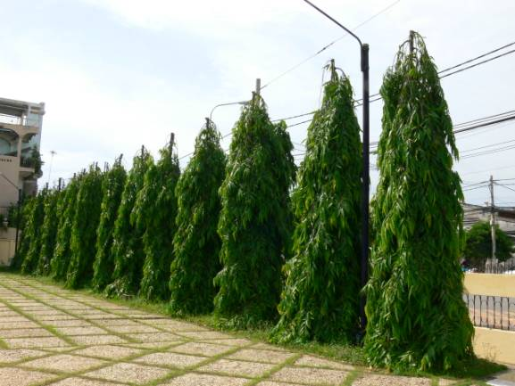 15 Trees Popularly Used For Landscaping In Nigeria