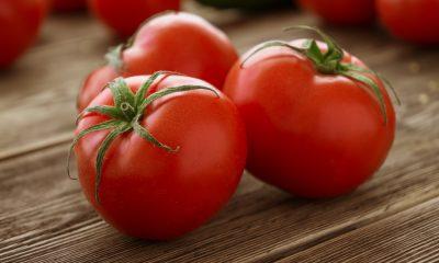 tomato business